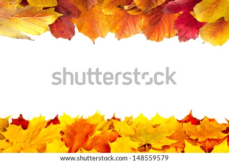 Colorful fall maple and viburnum leaves isolated on white - stock photo