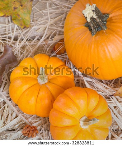Colorful fall pumpkins on a straw surface