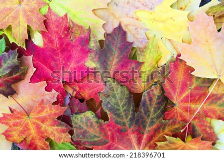 Colorful fallen autumn maple leaves as a background - stock photo
