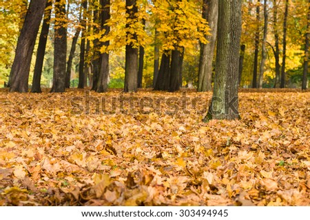 Colorful fallen autumn yellow and orange leaves in the park, trees on background - stock photo