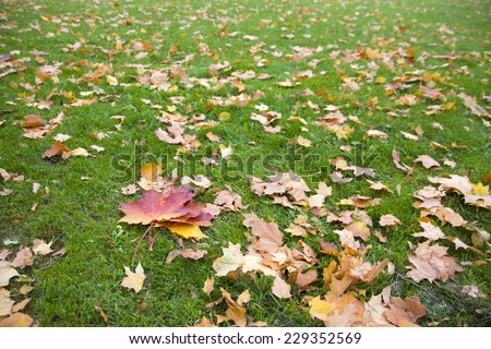 colorful fallen leaves on green grass - stock photo