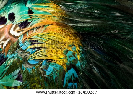 Colorful feathers. - stock photo