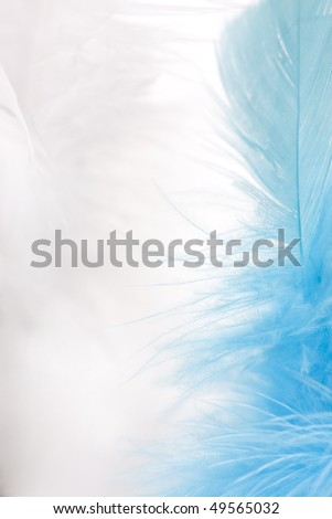 colorful feathers easter background