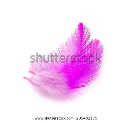 Colorful feathers. isolated on white background