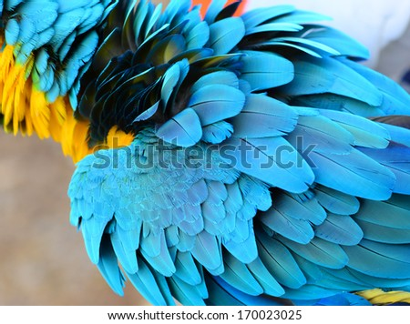 Colorful feathers, parrot macaw feathers background  - stock photo