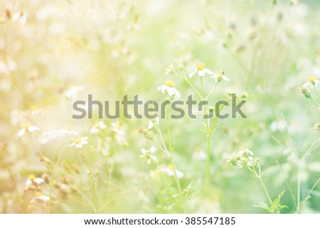 colorful Field and natural bokeh