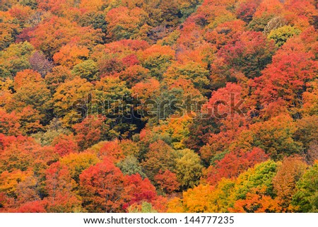 Colorful field of trees on the side of a mountain during fall foliage in Stowe Vermont, USA - stock photo