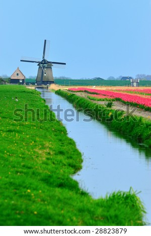 colorful field of tulips and windmill in the Netherlands - stock photo