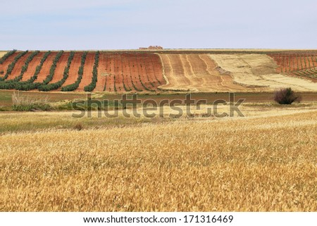 Colorful fields of vineyards and cereals in Cornalvo, Extremadura, Spain - stock photo