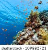 Colorful fish and corals on a shallow coral reef in the Red Sea - stock photo
