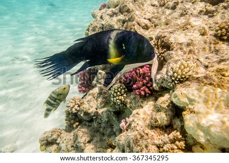 Colorful fish swim on a coral reef in the Red Sea in Egypt - stock photo