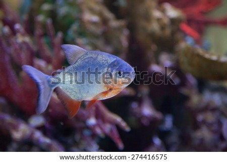colorful fish swimming in water - stock photo
