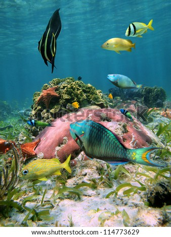 Colorful fish with coral and starfish in the Caribbean sea - stock photo