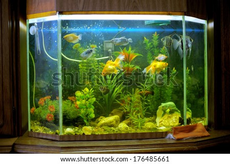 colorful fishes in aquarium on wooden shelf - stock photo