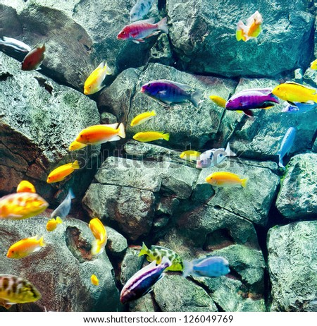 colorful fishes near rock - stock photo
