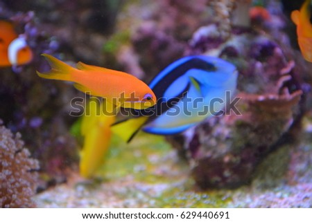 colorful fishes warm seas