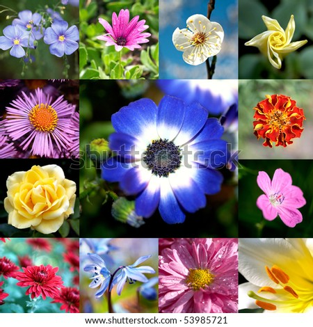 Colorful Floral Collage - Flower Collection - stock photo
