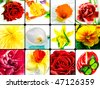 Colorful Floral Collage.   Installation from twelve  spring flowers close up. - stock photo