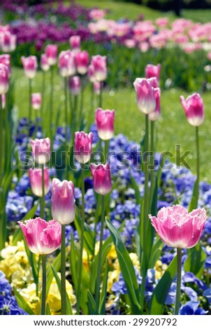 Colorful flower bed - stock photo