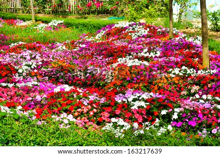 Colorful flower bed with  begonia.