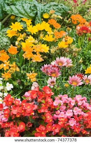 Colorful flower bed with Gazania and Begonia - stock photo