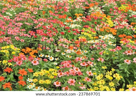 Colorful flower field - stock photo