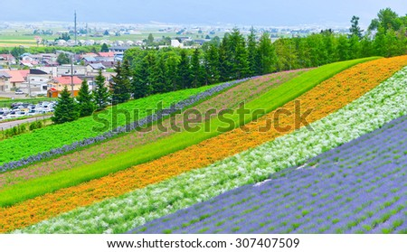 Colorful flower field in Hokkaido, Japan - stock photo