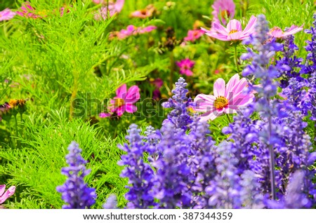 Colorful flower garden with a blurred background selective focus - stock photo