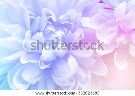 Colorful flower in soft color and blur style for background