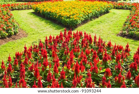 colorful  flower in the garden - stock photo
