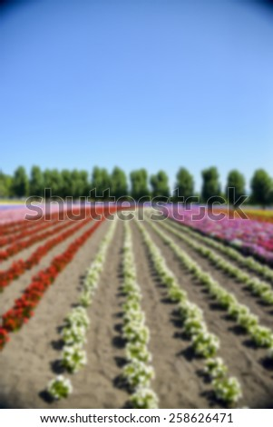 Colorful flower in the row in Blur style - stock photo