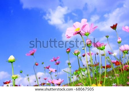 Colorful Flower on Beautiful Blue Sky - stock photo