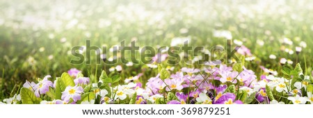 colorful flower panorama with lot of copyspace