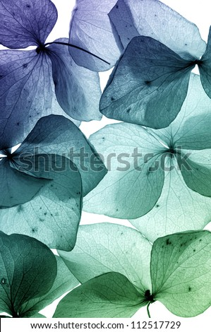 colorful flower petal - stock photo