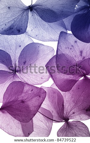 colorful flower petal closeup - stock photo