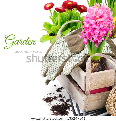Colorful flowers and garden tools isolated over white - stock photo