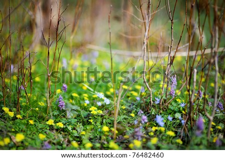 Colorful flowers at  blossoming late spring or summer - stock photo