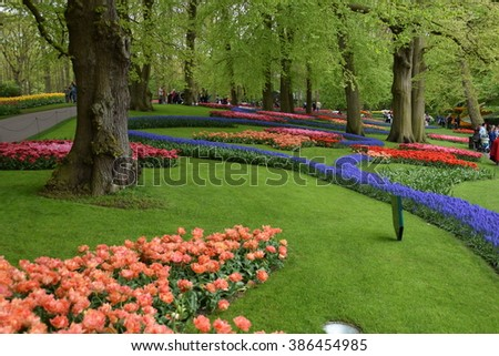 Colorful flowers blossoming in Keukenhof, the largest and one of the best spring gardens of the World. Lisse, the Netherlands, 8 May 2015