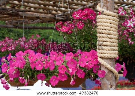 Colorful flowers garden with rope around a timber. - stock photo