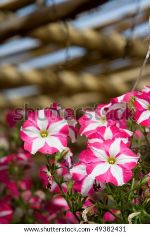 Colorful flowers in a garden. - stock photo