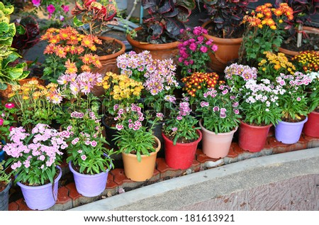 colorful flowers in pot - stock photo