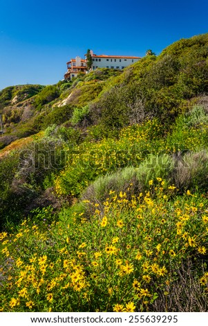 Colorful flowers on a hillside in San Clemente, California. - stock photo