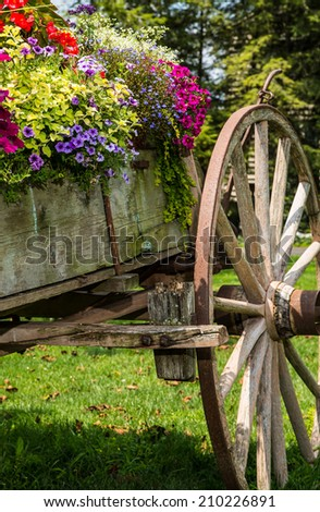 Colorful flowers on authentic Conestoga working wagon.
