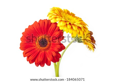 colorful flowers on white background