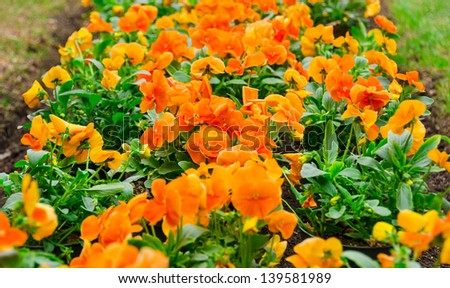 colorful flowers ready to planting in the spring garden. - stock photo