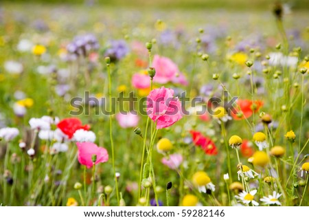 Colorful flowers, selective focus on pink flower