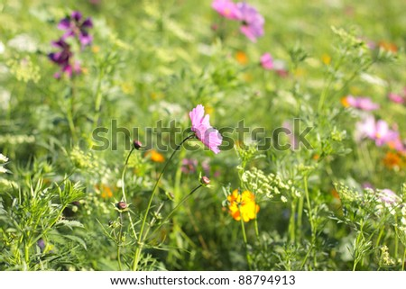 Colorful flowers, selective focus on pink  red and orange  flower - stock photo