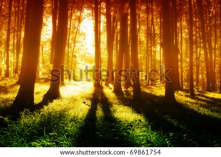 Colorful  foggy, mystical forest  at evening - stock photo