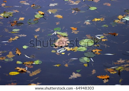 Colorful foliage floating in the dark fall water - stock photo