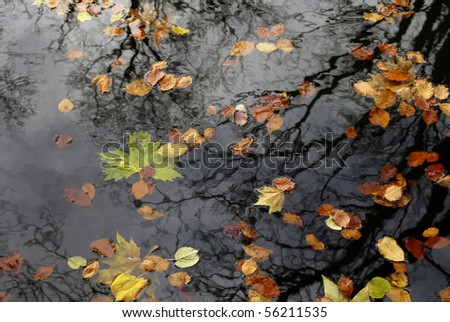 Colorful foliage floating in the dark fall water with reflection of the trees. - stock photo